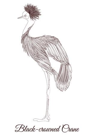 Black crowned crane outline bird Illustration