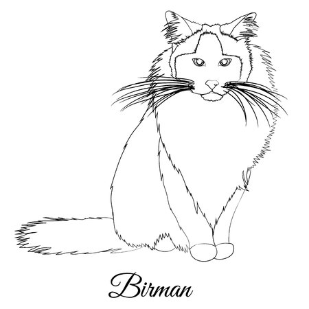 Birman cat breed coloring outline
