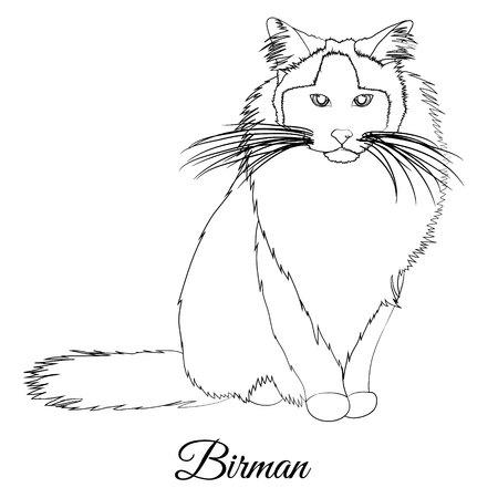 Birman cat breed coloring outline Фото со стока - 129084210