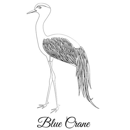 Blue crane bird vector outline Фото со стока - 129084225