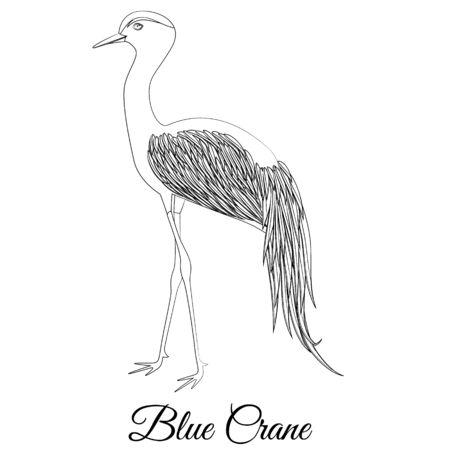 Blue crane bird vector outline Illustration