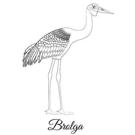 Brolga stork vector outline. Coloring bird