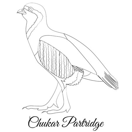 Chukar partridge coloring vector. Outline image