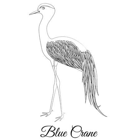 Blue crane bird vector outline Ilustração