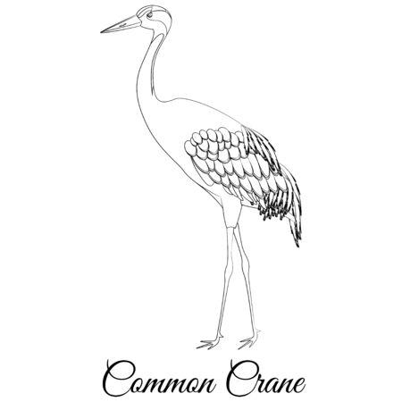 Common crane outline. Vector bird coloring
