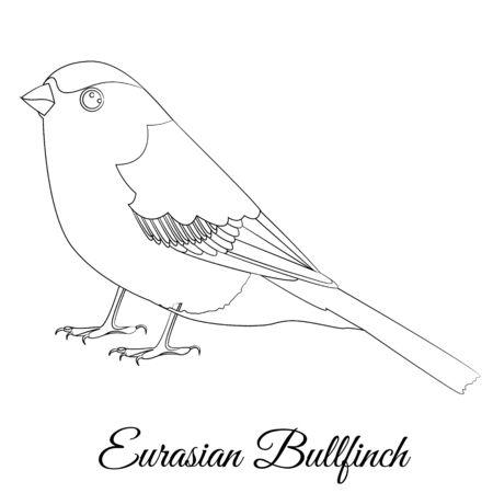 Eurasian bullfinch cartoon bird coloring vector illustration Ilustrace