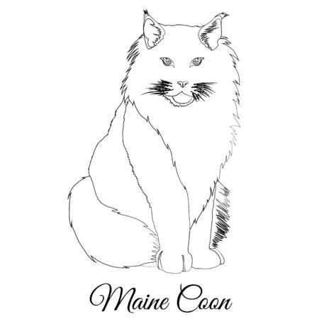 Maine coon cat coloring. Vector image Ilustração