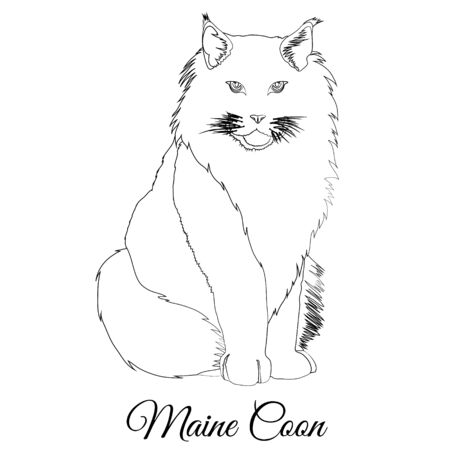 Maine coon cat coloring. Vector image Illustration