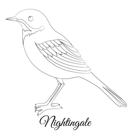 nightingale bird coloring. Vector image 矢量图像