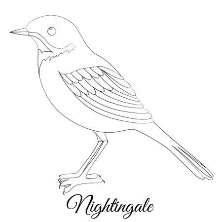 nightingale bird coloring. Vector image Illustration