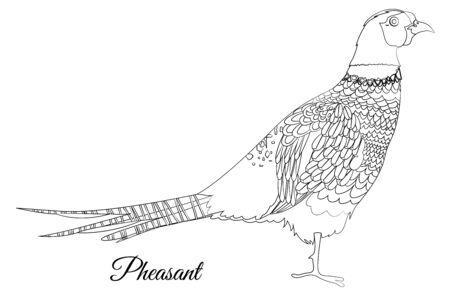 pheasant bird coloring. Vector outline image Standard-Bild - 128450360