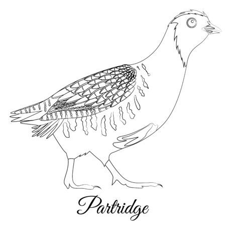 Partridge bird coloring. Vector outline image Vettoriali