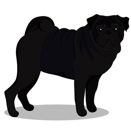 Pug black cartoon. Vector image Illustration