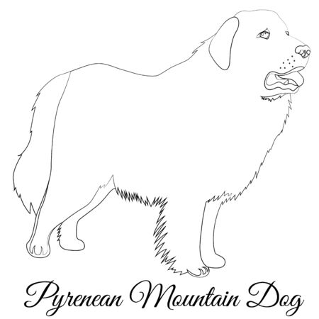 Great Pyrenees dog outline. Vector coloring