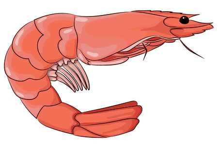 Pink shrimp hand drawing isolated