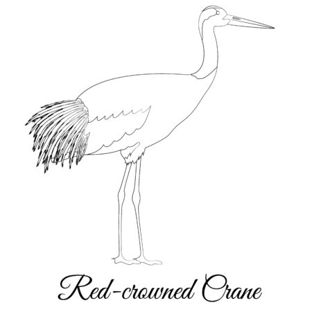 Red crowned crane outline vector