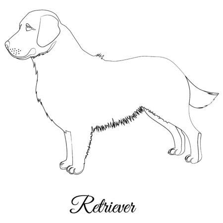 Golden retriever dog outline vector Фото со стока - 135043014