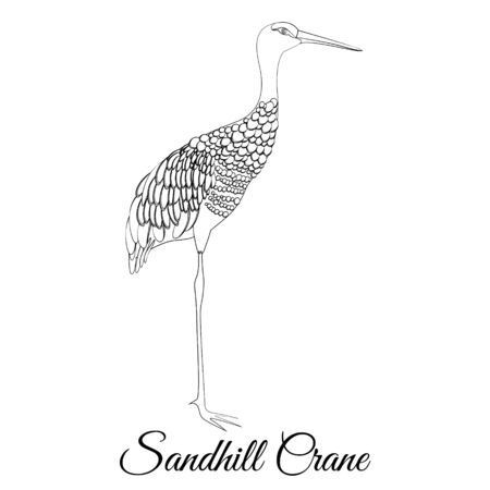 Sandhill crane outline vector coloring