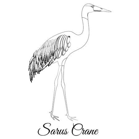 Sarus crane outline vector coloring