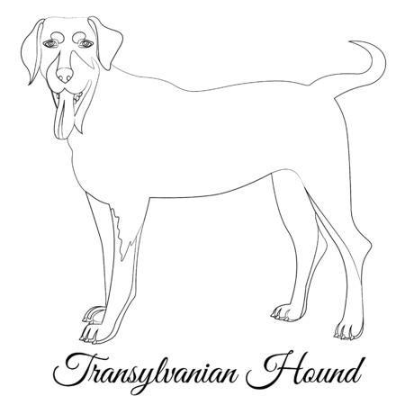 Transylvanian hound cartoon dog outline Illustration