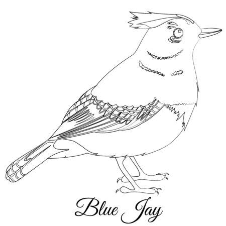 Blue jay bird coloring cartoon vector illustration Çizim