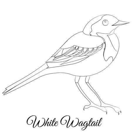 White Wagtail bird coloring. Vector cartoon bird type