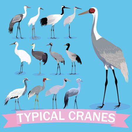 Typical cranes set cartoon. Vector cartoon birds. Illustration