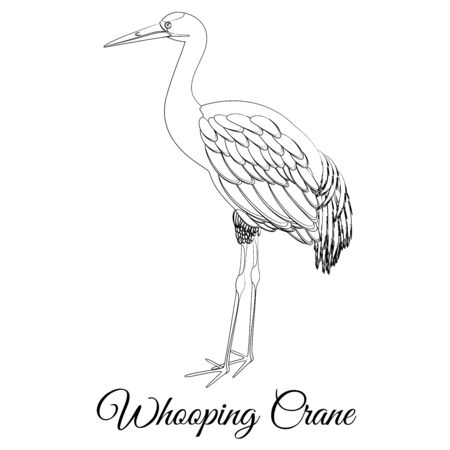 Whooping crane outline vector illustration