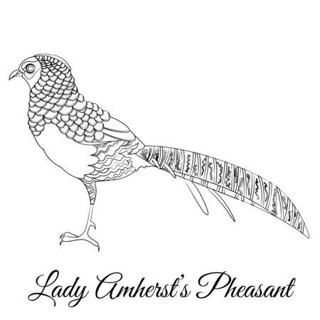 Lady Amherst, fagiano, cartone animato, colorare, vettore, illustration Vettoriali