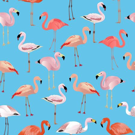 Flamingo species cartoon set. Vector birds collection Çizim