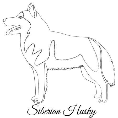 Siberian Husky dog outline vector