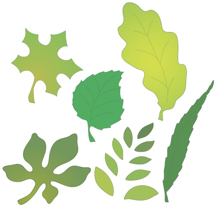 Vector image of leaves