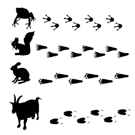animals and their tracks Illustration