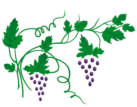 grape Stock Vector - 6764294