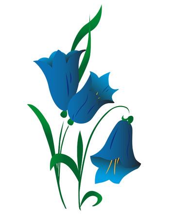 Campanula, flower Vector