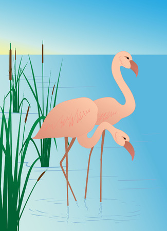 Pink flamingos on lake with canes Vector