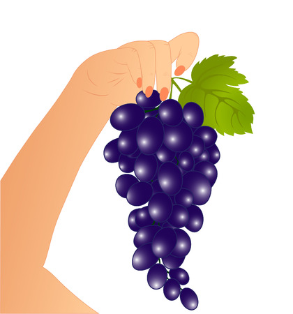 Grape in a hand Stock Vector - 7123538