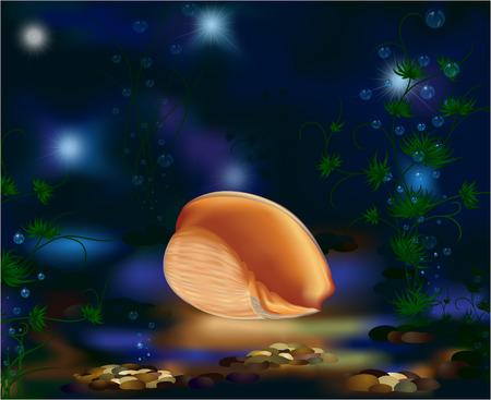 Underwater world, seashell and plants