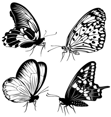 animal silhouette: Set black white butterflies of a tattoo