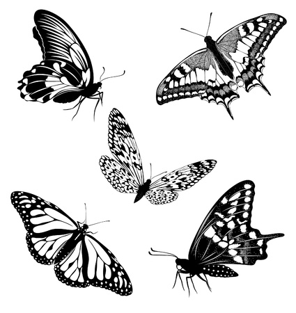 black and white backgrounds: Set black white butterflies of a tattoo