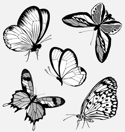 Set black white butterflies of a tattoo Stock Vector - 9144603