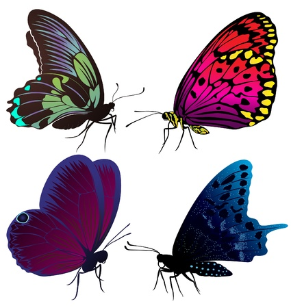 Set of color butterflies of tattoos