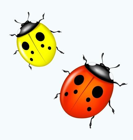 Vector ladybird Illustration