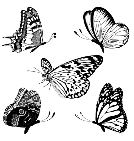 Set  black white butterflies of a tattoo Stock Vector - 9563488