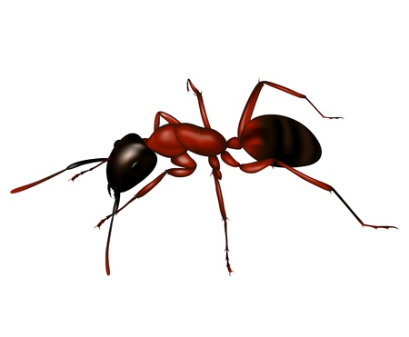 Ant a silhouette Illustration