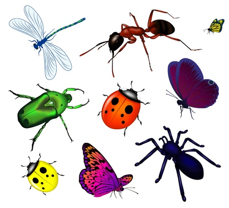 Set of various insects Stock Vector - 9931433