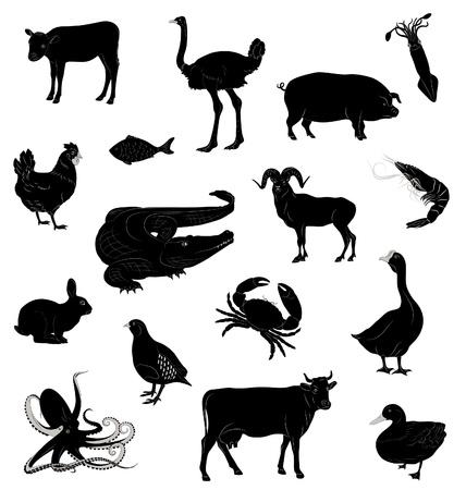 pulpo: Con siluetas de varios animales