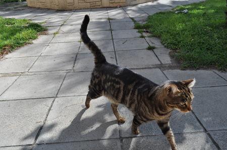 Cat in Limassol Beach