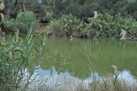 The beautiful Athalassa National Park Nicosia (Cyprus)