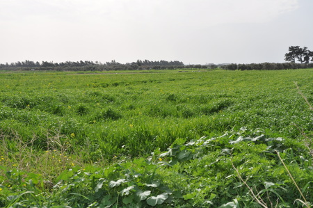 The beautiful natural Meadow landscape in Cyprus